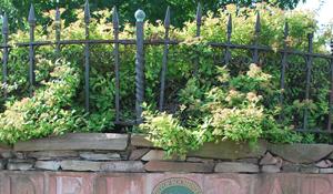 preservation - rundel park